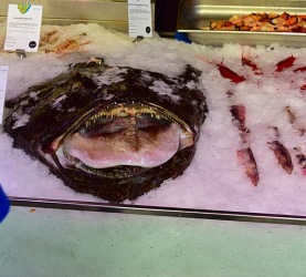 Picture of scary fish sold at Mercato San Miguel in Madrid Spain