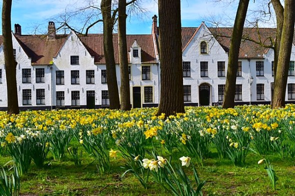 Picture of daffodils in Bruges in the spring