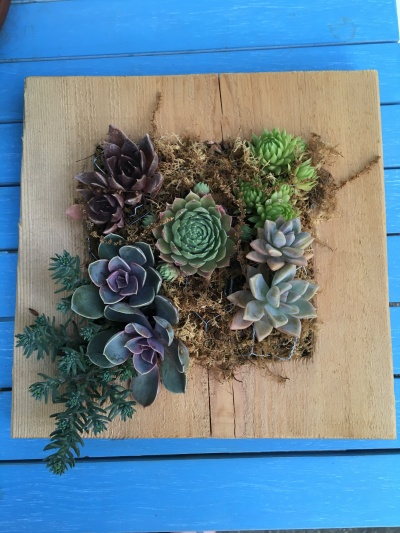 Picture of vertical succulent planter
